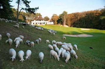 Golfbaan Wassenaar